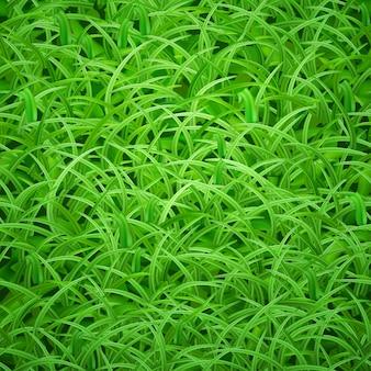Sfondo di erba verde fresca, illustrazione vettoriale