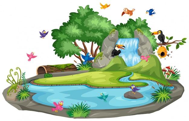 Scena di sfondo di uccelli alla cascata