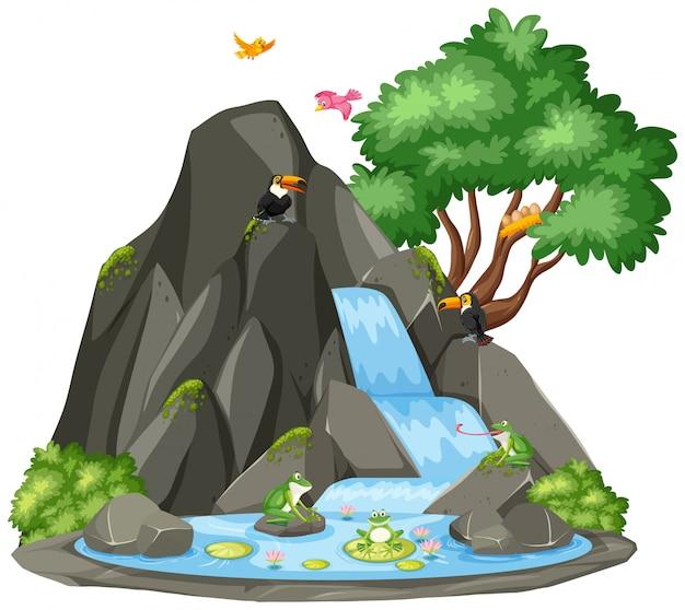 Scena di sfondo di tucano e rana dalla cascata