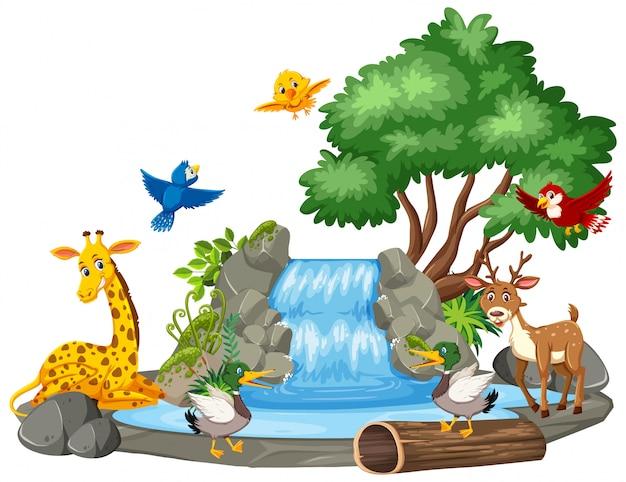Scena di sfondo di animali selvatici alla cascata