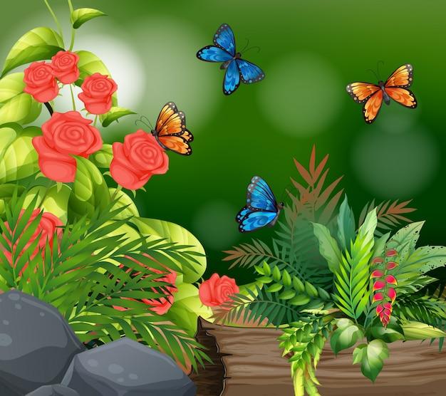 Scena di sfondo con rose e farfalle