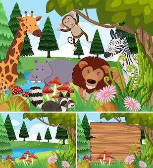 Scene di sfondo con animali selvatici e tavola