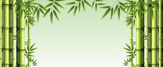 Modello di sfondo con bambù verde