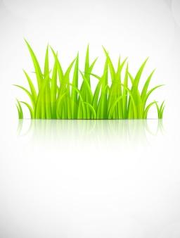 Sfondo con erba verde.