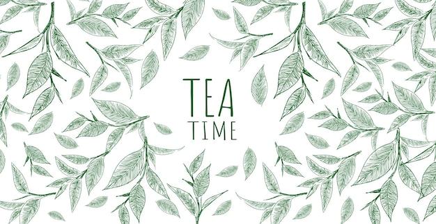 Sfondo con tè verde disegnato a mano