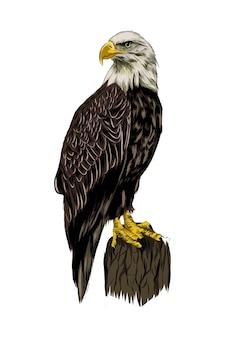 Aquila calva da una spruzzata di acquerello