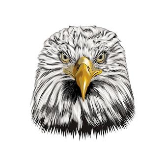 Ritratto di testa di aquila calva da una spruzzata di acquerello Vettore Premium