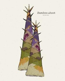 Germoglio di bambù, schizzo di tiraggio della mano.