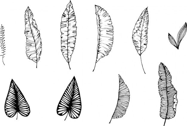 Foglie ed erbe della banana disegnate a mano con la penna