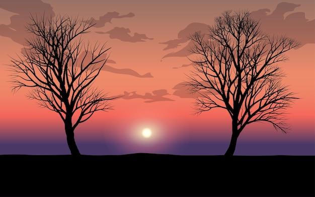 Silhouette di alberi spogli con tramonto