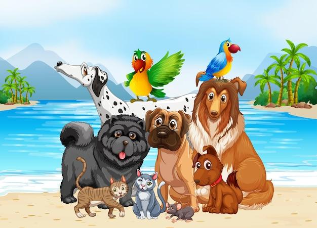 Scena all'aperto sulla spiaggia con un gruppo di animali domestici