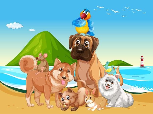 Scena all'aperto in spiaggia con un gruppo di animali domestici