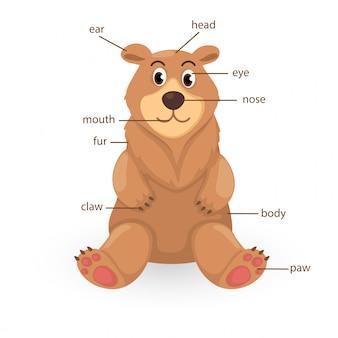 Orso vocabolario parte del vettore del corpo