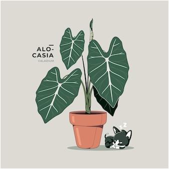 Bellissimo sfondo dell'illustrazione della pianta di alocasia