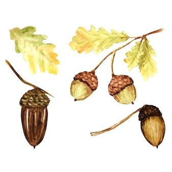 Bellissimi colori brillanti set di foglie di quercia, rami e ghiande. illustrazione disegnata a mano