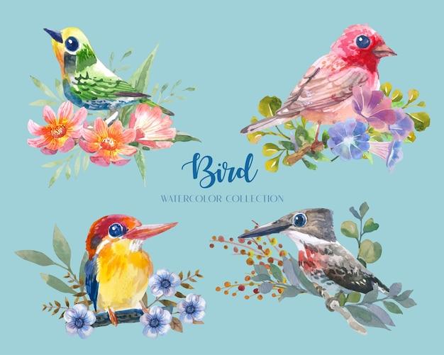 Bellissimo e colorato uccellino con ramo e insieme di raccolta dell'acquerello del fiore (4 uccelli).