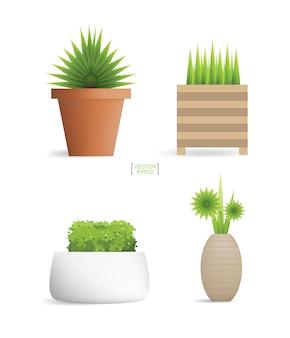 Bellissime piante decorative in vaso di fiori