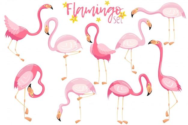 Set di bellissimi fenicotteri rosa eleganti, illustrazioni di uccelli tropicali esotici
