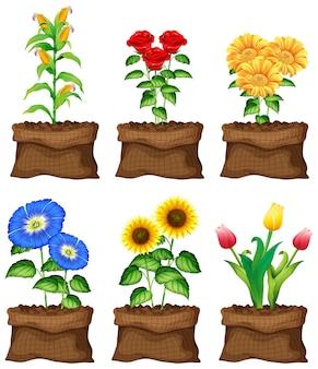 Bei fiori in borse marroni su fondo bianco