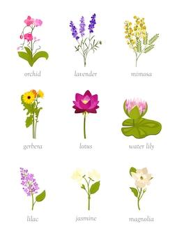 Set di illustrazioni di bellissimi fiori, orchidea, lavanda, mimosa, gerbera, loto, ninfea, lilla, gelsomino e magnolia.