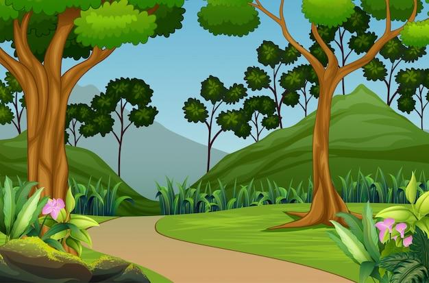 Bellissimo paesaggio della foresta con sfondo di montagna