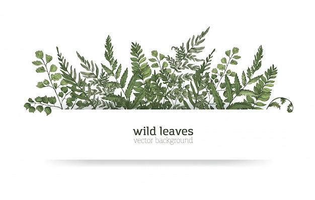 Bellissimo sfondo orizzontale o banner decorato con splendide felci, erbe selvatiche o piante erbacee verdi. elegante sfondo a base di erbe o bordo. illustrazione naturale realistica colorata