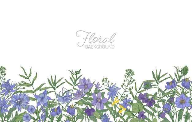 Bellissimo sfondo floreale orizzontale decorato con fiori che sbocciano prato selvatico blu e viola che crescono sul bordo inferiore su bianco