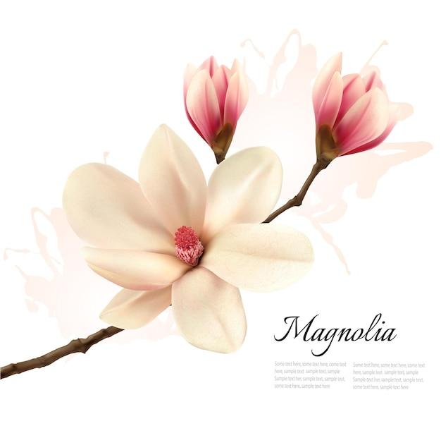 Bellissimo sfondo di fiori di magnolia. vettore.
