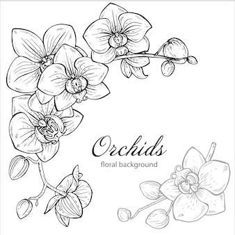 Bellissimo sfondo floreale monocromatico con fiore di orchidea