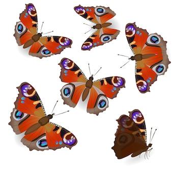 Bella farfalla pavone isolata su sfondo bianco in diverse posizioni, in volo e in seduta.