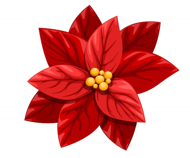Bella poinsettia rosso fiore decorazione di natale ornamento di natale illustrazione su sfondo bianco