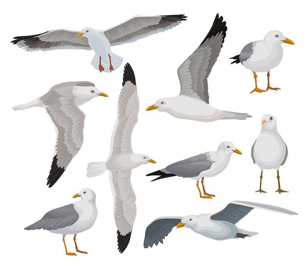 Bellissimo set di gabbiano, uccello di mare grigio e bianco in diverse pose illustrazioni su uno sfondo bianco