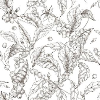 Bello modello senza cuciture con rami di coffea o caffè, foglie, fiori che sbocciano e frutti su bianco.