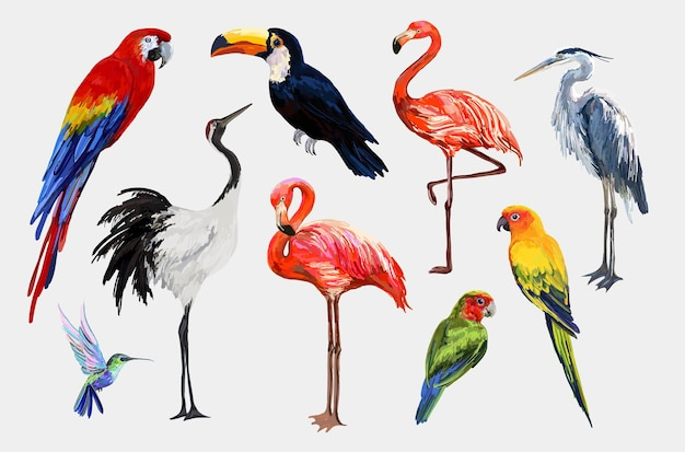 Bellissimi uccelli tropicali esotici vintage tropicali clip art gru tucano fenicottero pappagallo