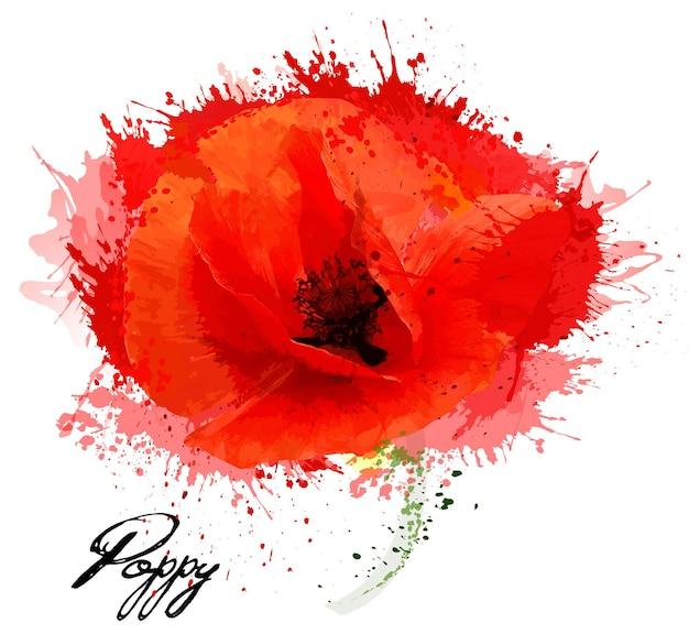 Bello disegno del papavero del fiore dell'acquerello. vettore.