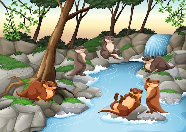 Castori che vivono vicino al fiume