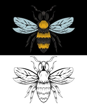 Illustrazione dell'ape