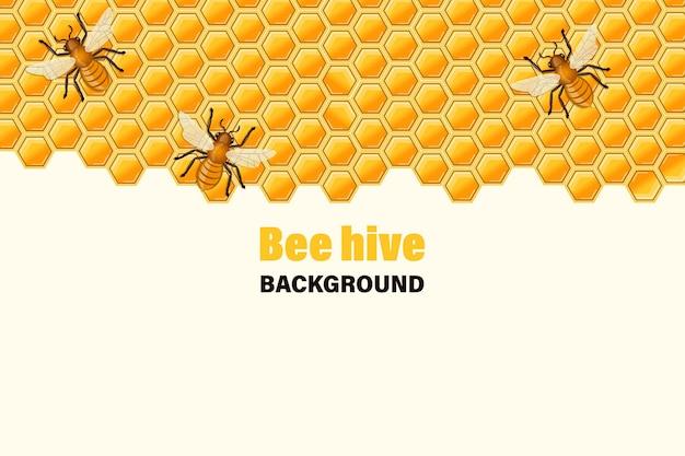 Ape che si siede sul favo di miele.