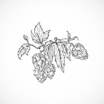 Ramo di luppolo di birra. schizzo astratto. illustrazione disegnata a mano.
