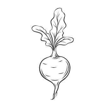 Icona di contorno di barbabietola vegetale, illustrazione monocromatica di disegno