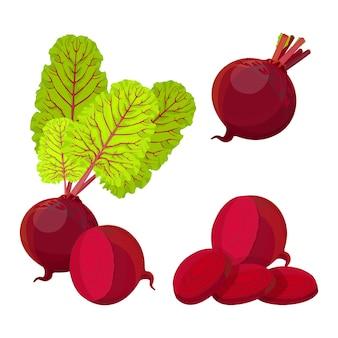 Barbabietola intera metà e fette. barbabietola con foglie verdi fresche illustrazione realistica