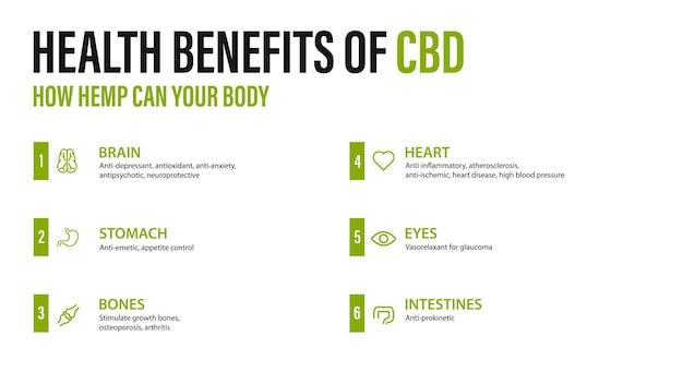 Benefici del cbd per il tuo corpo, poster bianco con infografica. benefici per la salute del cannabidiolo cbd da cannabis, canapa, marijuana, effetto sul corpo