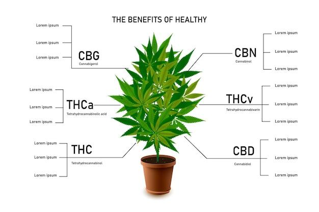 I benefici della marijuana sana lasciano un'infografica sul cannabinoide 101
