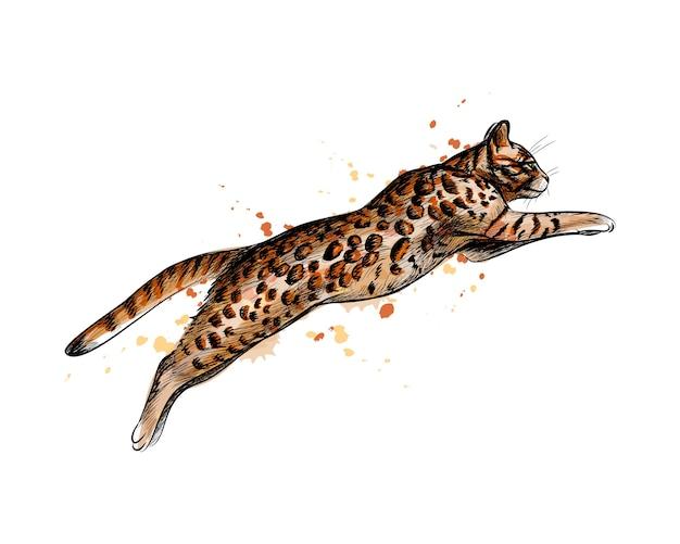 Gatto bengala che salta da una spruzzata di acquerello, schizzo disegnato a mano. illustrazione di vernici