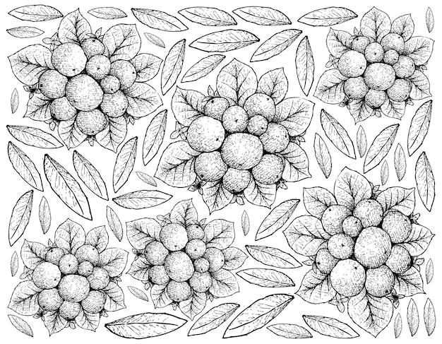 Sfondo di illustrazione di frutti di bosco di schizzo disegnato a mano