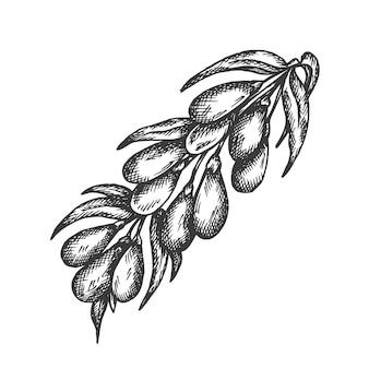 Berry disegnati a mano illustrazione.