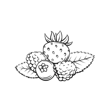 Berry contorno. mirtilli, lamponi, more e fragole. bacca di disegno foresta o giardino.
