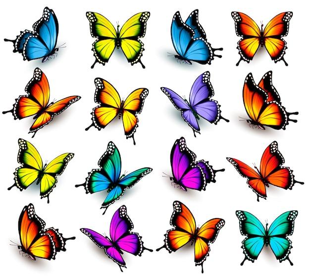 Grande collezione di farfalle colorate. vettore
