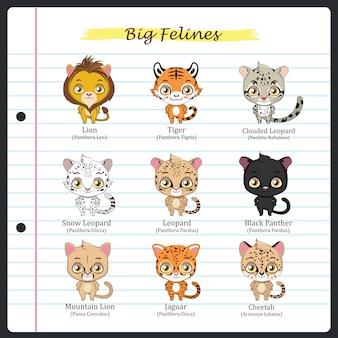 Grandi illustrazioni feline con nomi regolari e scientifici