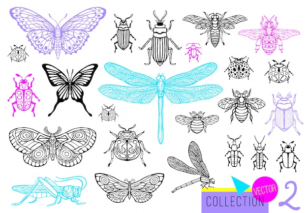 Insieme di linea disegnata a mano grande di insetti insetti, coleotteri, api da miele, farfalla; falena, calabrone, vespa, libellula, cavalletta. illustrazione incisa stile schizzo vintage sagoma.